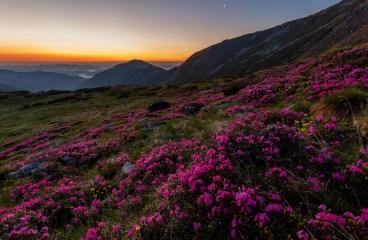 Parcul National Muntii Rodnei, un loc pe care trebuie sa il vizitezi daca iubesti natura salbatica!