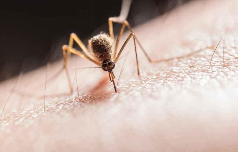 mosquito biting on skin