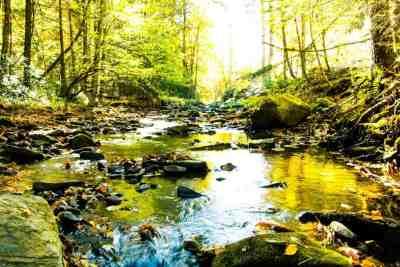 Stream in the Quehanna Wild Area