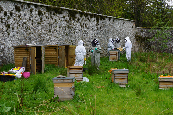At the Apiary