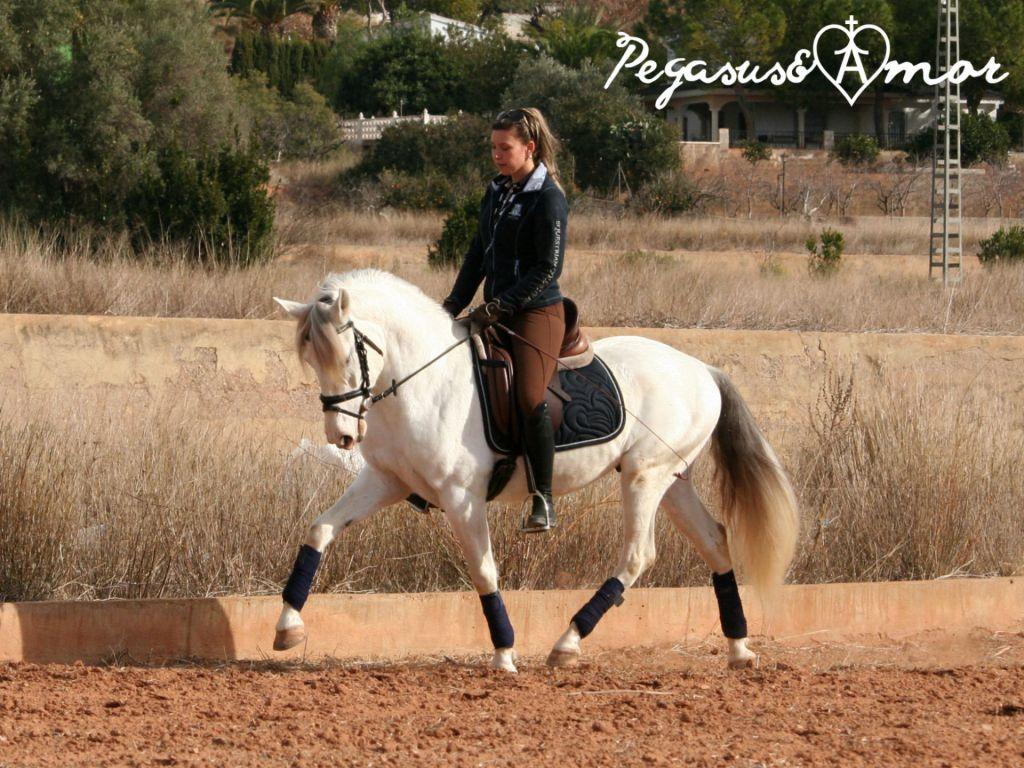 Anubis | Pegasus&Amor - Andalusian Horses for Sale