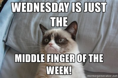 angry cat hump day meme - Hump Day Funnies