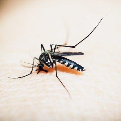 Dengue NS1 Test Philippines