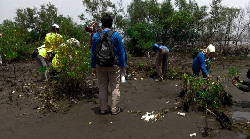 Pesisir Utara Pekalongan Ditunjuk Jadi Lokasi Konservasi Mangrove
