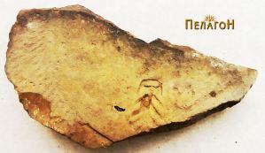 Фрагмент од чинија со украсување на дното