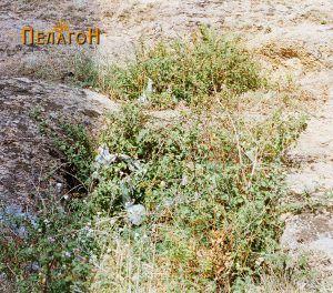 Гробница бр. 4 - распадната
