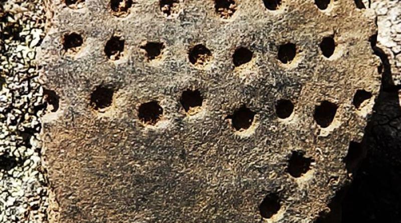 Фрагмент од керамички сад со украсување - устинка