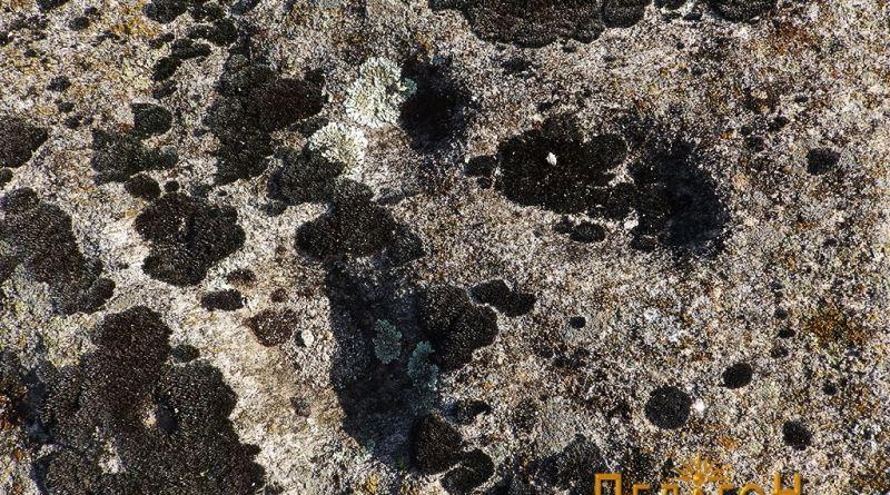 Детал од саимболиката на хоризонталната површина на жртвеникот