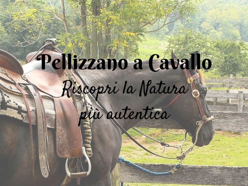 cavallo-pellizzano-passeggiate-natura