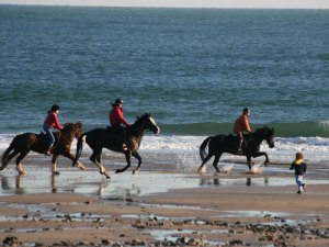 Horse Riding in the Pembrokeshire Coast National Park