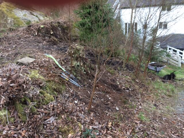 Same hill, with rhodos cut back, and beginning to remove soil and other plant life