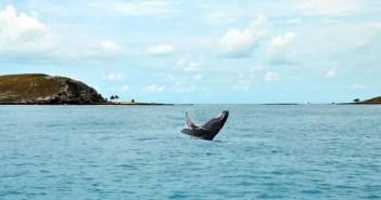 Como é avistar baleias em Abrolhos