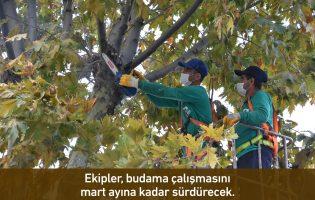 Pendik'te Ağaç Budama Mevsimi Başladı
