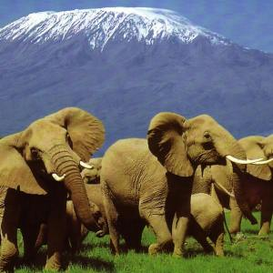 Elephants at Amboseli National Park | Kenya Tours and Safaris