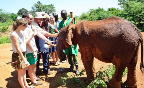 Baby Elephant at Sheldrick Elephant Orphanage