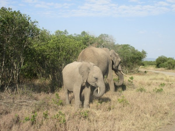Elephant with baby at Ol pejeta Conservancy Kenya Safari