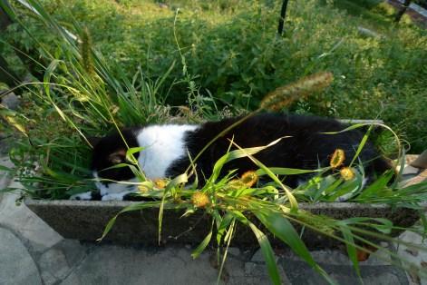 Flower Nap