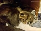 2017-04-KittenSleepy-1