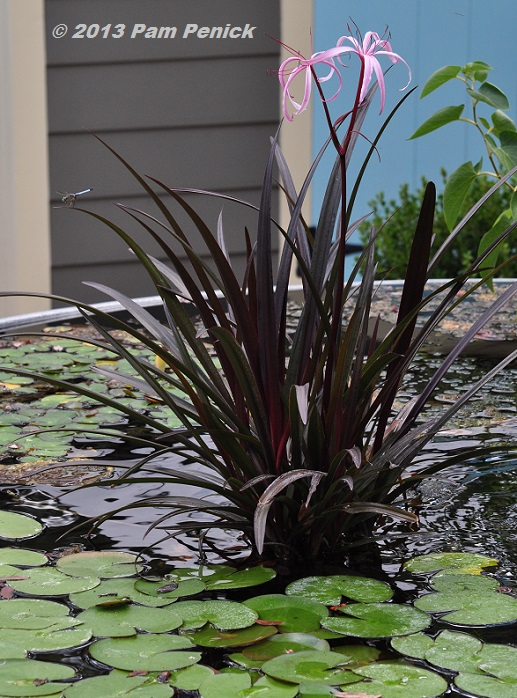 Where Buy Pond Plants Online