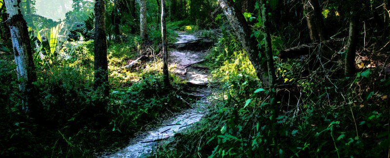 Crooked paths and flows