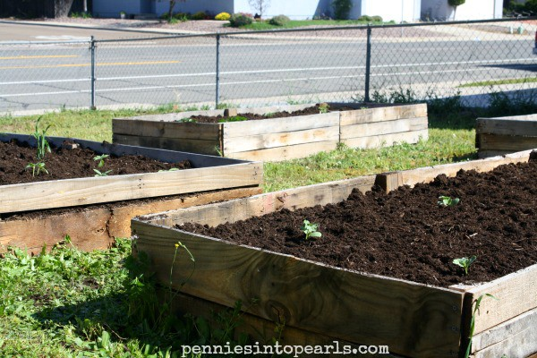 Exceptional How To Make Your Own Pallet Wood Raised Garden Or Planter Beds    Penniesintopearls.com