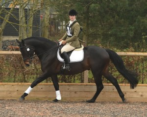 Pennineview Silver Concorde - SHB Stallion Grading 2015 - LH Canter