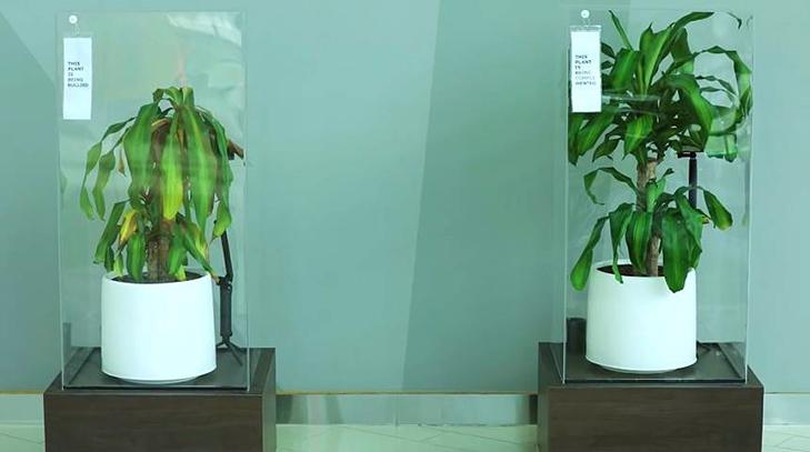 Efeito de bullying em plantas - Pensamento Verde