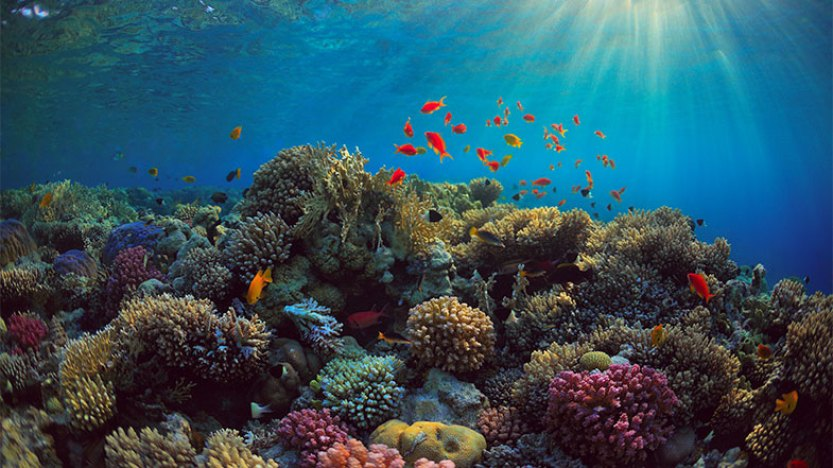 Algas desenvolvidas em laboratório podem proteger recifes de coral ameaçados pelo aquecimento global - Pensamento Verde