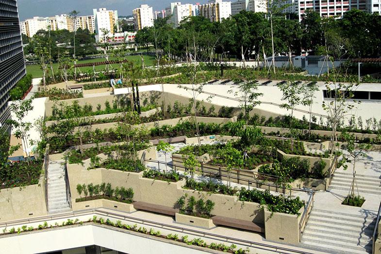 Conheça um hospital que usa a natureza como remédio - Pensamento Verde
