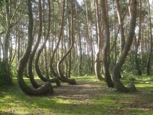hoia_baciu_trees