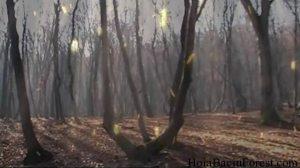 hoia_baciu_forest3