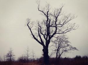 albero del diavolo