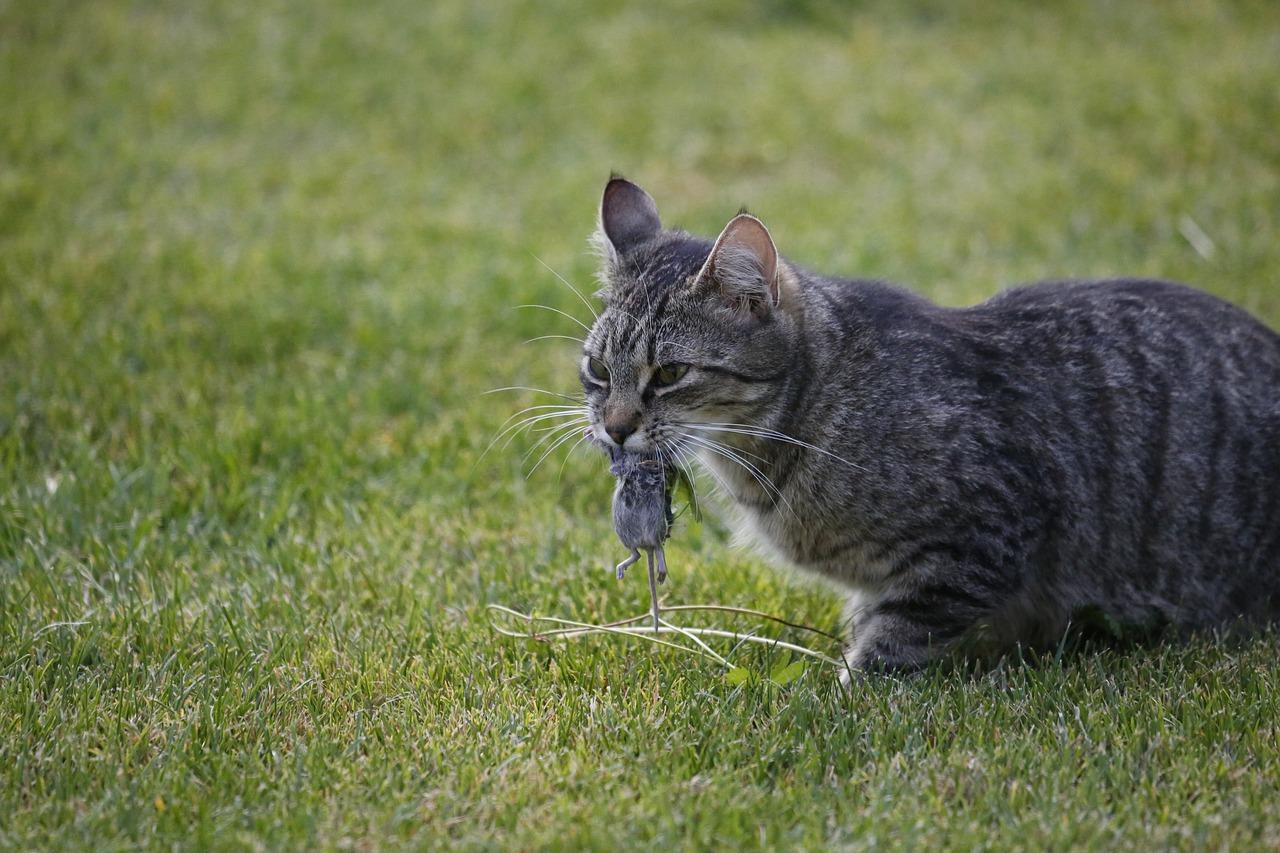 Quand votre chat vous rapporte une proie…