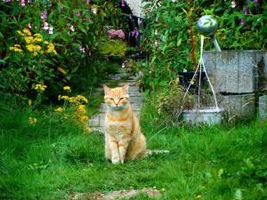 chat au potager