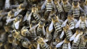 δραματικές-οι-ελλείψεις-στον-αριθμό-των-μελισσών-για-την-επικονίαση-των-καλλιεργειών