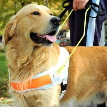 5 lekcija koje sam naučila o starenju – od svojih pasa