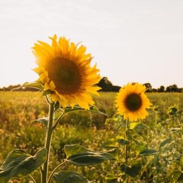 10 načina kako zaštititi srce tokom velikih vrućina