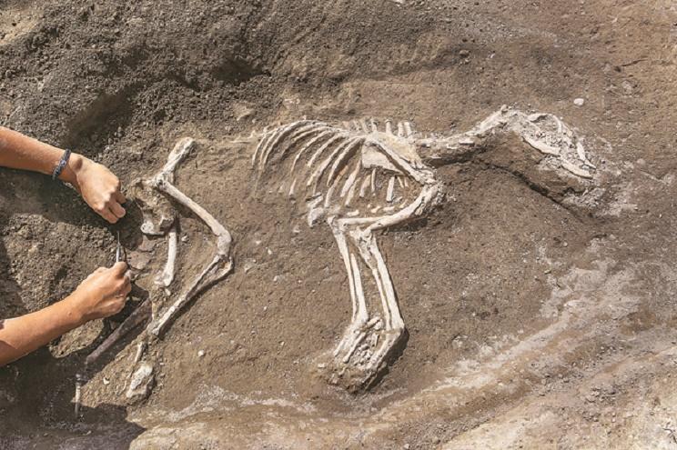 3000 year old dog skeleotn found in Van