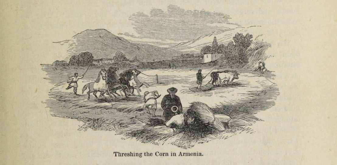 Threshing the corn in Armenia