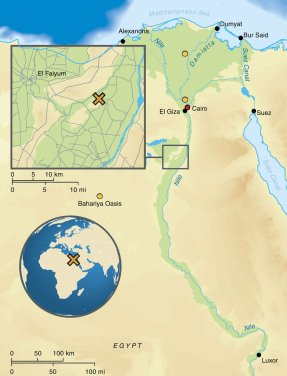 Map of Egypt depicting the location of the archaeological site Abusir-el Meleq (orange X) and the location of the modern Egyptian samples (orange circles)