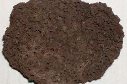 world's oldest human brain