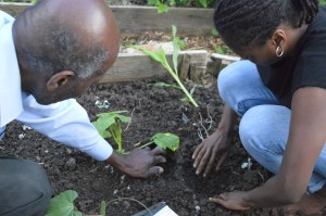 Intergenerational planting of the 'three sisters' at May Project Gardens, London