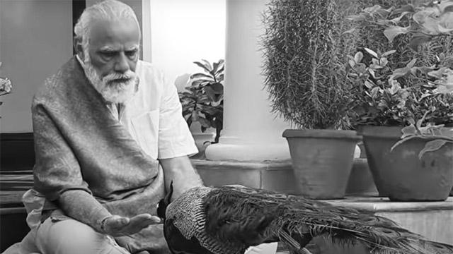 Modi feeding a peacock