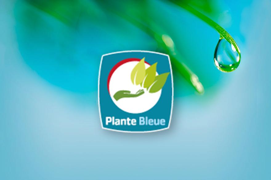 Les p pini res chastel certifi es plante bleue for Plante bleue