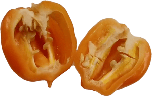 A cut open Peach Scotch Bonnet pepper