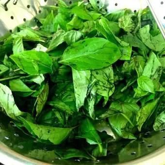 Basil leaves for basil oil