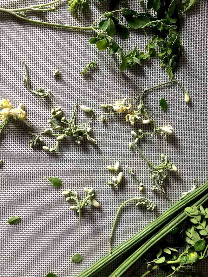A grey background showing 2 drumsticks (moringa pods) in the lower righ corner, white and pale green moringa flowers scattered all over and a mornga leaves upper right corner, from our gardens and all used in the drumstick corn carrot soup