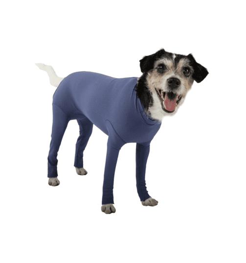dog body
