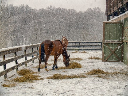 Horses x2 Stable Snow