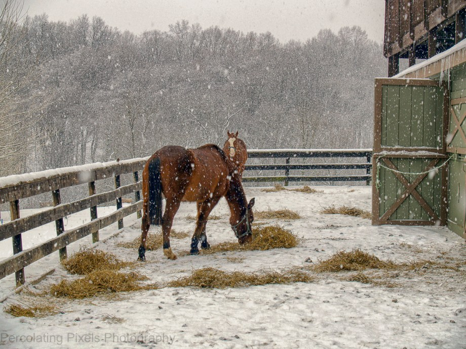 Horses x2 Stable Snow
